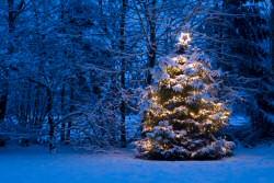 Weihnachtsbaum mit Verrechnungsgarantie!
